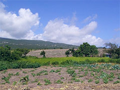 Hydroplan Agricultural Development Jamaica